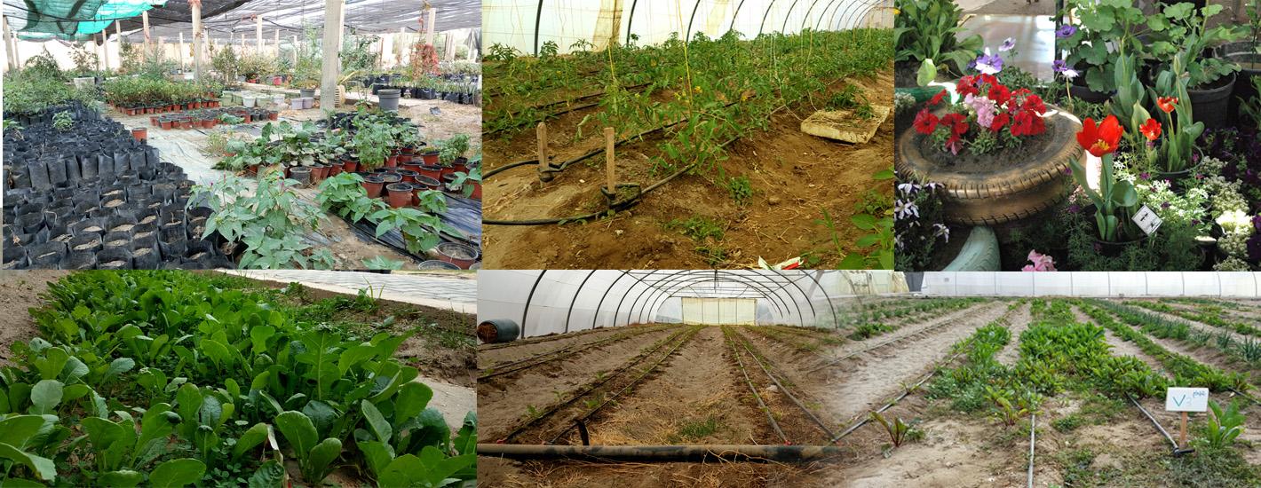 حقول كلية الزراعة في صور