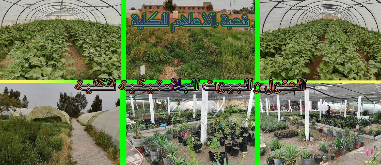 الحقول الزراعية والبلاستيكية للكلية