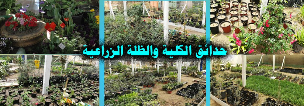 حدائق الكلية والظلة الزراعية